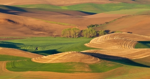 Patterns in the Palouse by Gary Hamburgh - All Rights Reserved