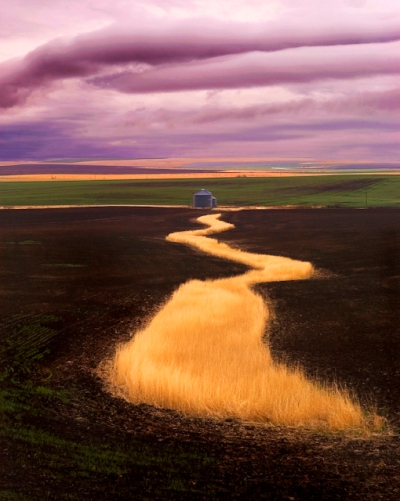 River of Wheat by Gary Hamburgh - All Rights Reserved