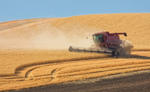 Red Combine at Work by Gary Hamburgh - All Rights Reserved