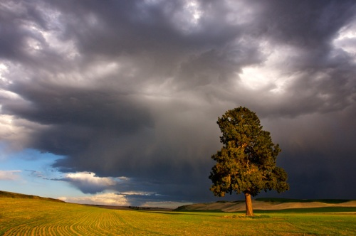 Storm Clouds over Lone Pine by Gary Hamburgh - All Rights Reserved