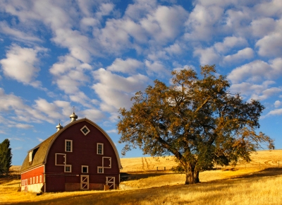 Barn in Morning Light by Gary Hamburgh - All Rights Reserved