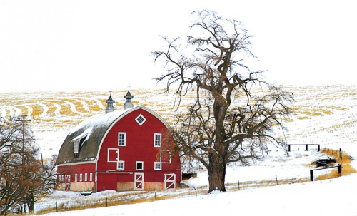 Winn Road Barn in Snow by Gary Hamburgh - All Rights Reserved