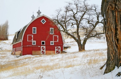 Wind Road Barn in Snow Close by Gary Hamburgh - All Rights Reserved