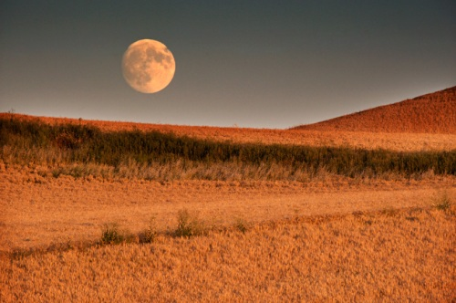 Moon above Wheat Field by Gary Hamburgh - All Rights Reserved