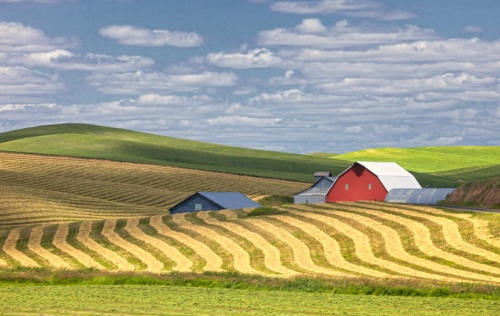 Patterns in the Hay by Gary Hamburgh - All Rights Reserved