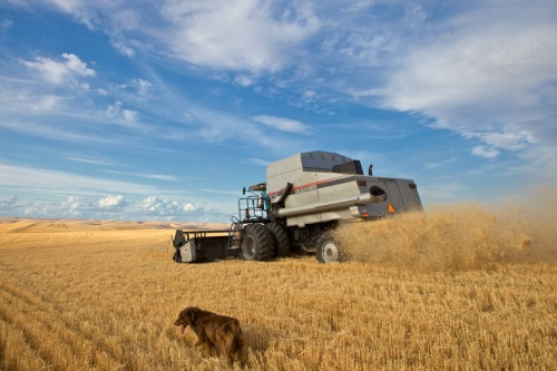 Gleaner Combine 3 by Gary Hamburgh - All Rights Reserved