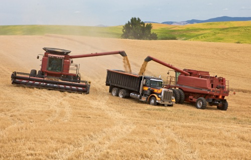 Case IH Combine 1 by Gary Hamburgh - All Rights Reserved