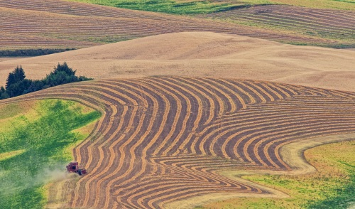 Lentil Harvest in the Palouse by Gary Hamburgh - All Rights Reserved