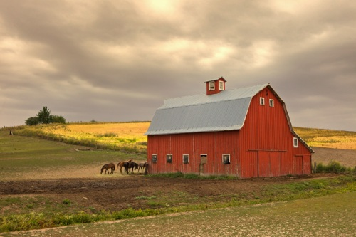 Horses near Red Barn - Copyright Gary Hamburgh 2009 - All Rights Reserved