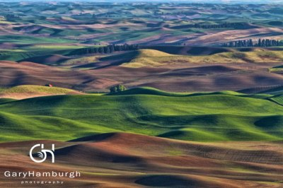 GHP_MG_2481-Rolling-Farmland-in-the-Palouse_WM